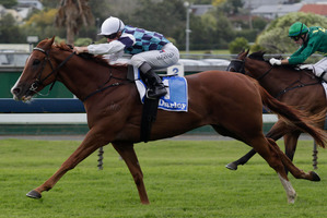 Durham Town will contest the Darley Plate at Ellerslie today. Photo / Richard Robinson