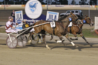 Mah Sish is well placed to add the Interdominion title to his Ballart Cup win. Photo / Stuart McCormick