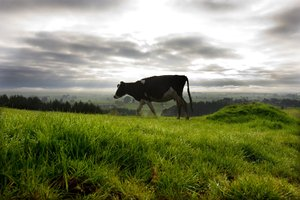 .Buying a farm is out of the financial reach of most investors. Photo / David White