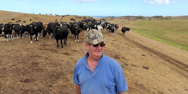 Colin Hadlow with his dairy cows which are waiting for their next feed of supplements which are costing him $100,000 a month. Photo / John Stone