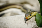 Rod Sommerville, 54, reached for a beer after being bitten by an eastern brown snake. Photo / Thinkstock