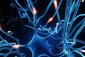 Stem cells regenerate brain tissue in the same way as they produce new skin cells when skin is cut. Photo / Thinkstock