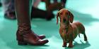 View: Crufts Dog Show 2014