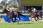 Rock Diva (left) is a chance in the Wellfield NZ Oaks at Trentham today. Photo / Richard Robinson