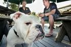 REVELATIONS: Hayden van Hooff (left) had psychic medium Jay Dobson sit down with his pet bulldog Caesar who was stolen then returned earlier in the month. PHOTO/WARREN BUCKLAND HBT140218-09