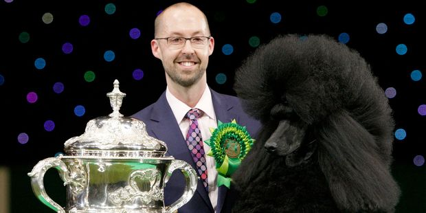 Two-year-old standard poodle Ricky with his handler Jason Lynn after winning Best In Show at the Crufts dog show in Birmingham. Photo /AP