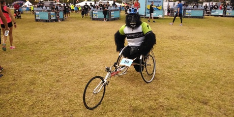Wheelchair athlete Lee Warn completes Round the Bays in a full gorilla suit.