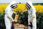 THE BUZZ: Apiculture is a growing industry in New Zealand that needs skilled workers and the Taratahi Agricultural Training Centre is to deliver the National Certificate in Apiculture, Level 2. PHOTO/SUPPLIED
