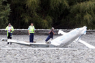 Light aeroplane crash in the Ngaruroro river near Maraekakaho in rural Hawkes Bay. Photo / Paul Taylor