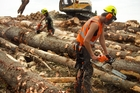 The forestry sector tops the charts in prompt payments. Picture / Natalie Slade