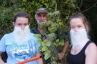 Dressed for the task, Charmaine Stanley (left), John Wing and Sofie Pearson tackle old man's beard (Clematis vitalba); INSET: windblown seeds spread the vine far and wide. Photo/Jo Mead