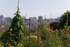 Would you like to see Garden Place transformed into a community garden like this one in San Francisco?
