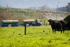 Fonterra's first-half result was good for farmers, but not for the company, an analyst says. Photo / Christine Cornege
