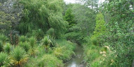 The Waitahurangi stream in Avondale, an example of an urban revegetated stream. Photo / Meg Liptrot