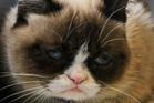Grumpy Cat, an Internet celebrity cat whose real name is Tardar Sauce. Photo / AP / Bebeto Matthews
