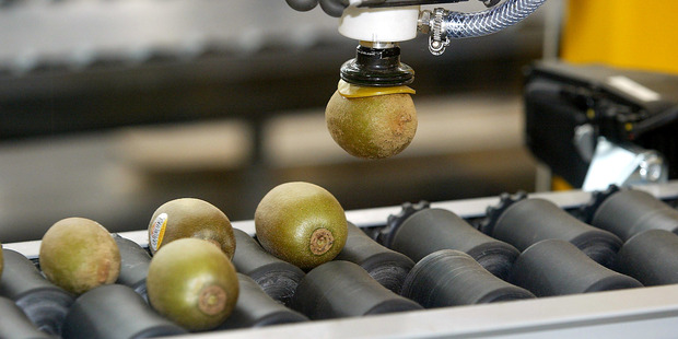 robotic claw speeds up kiwifruit packaging.