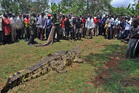 A giant crocodile caught by the Uganda Wildlife Authority. Photo / AFP