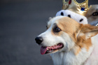 The Queen loves her corgis. Photo / Thinkstock