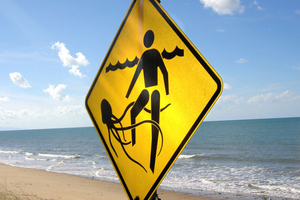 Vinegar could make box jellyfish stings more deadly. Photo / Thinkstock
