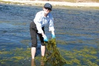 Previously clean waterways are now clogged with weeds - a situation we cannot change according to current trends. Photo / APN