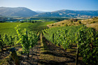 The Central Otago wine region.