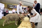 Kate was dazzling in a white dress as she met a ram called Fred at the Sydney Royal Easter Show. Photo / Getty Images