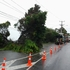 Tree down at the Old Albany Highway between Glenfield and Albany in Auckland. Photo / Paul Rostron