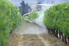 Spraying grapevines with Herbicide in Marlborough. Photo / Ross Setford