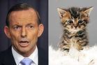 A phone app replaces the face of Australian PM Tony Abbott with cute kittens. Photo / AP / Thinkstock