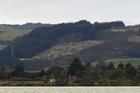 PROTECTION: Farmers are hopeful farming around Lake Rotorua will remain viable in the future. PHOTO/FILE