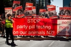 The possibility of testing on animals added to the debate. Photo / Sarah Ivey