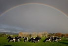 Over the calendar year 2013 dairy land prices rose by 10.1 per cent. Photo / Sarah Ivey