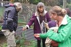 Identifying edible weeds in a Welcome Bay garden.