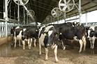 Fonterra owned dairy farm. Photo / David White