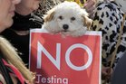 Protesters march to oppose animal testing on legal highs. Photo / File