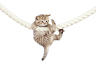 It can be hard to stick to new year's resolutions, but hang in there! Photo / Thinkstock