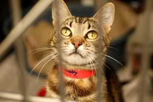 Adorable tabby cat Lucy is looking for a loving home.