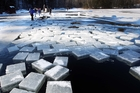 Blocks of ice float in Squaw Cove in Sandwich, New Hampshire, ready to be harvested. Photo / AP
