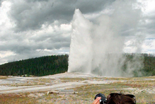 The Old Faithful geyser erupts at Yellowstone National Park. Photo / AP