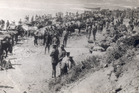 New Zealand and Australian troops at Gallipoli after the invasion by Anzac troops during World War 1. Photo / File