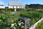 The writer deposited her food waste in Great Barrier Island community garden compost bins  in return for a day's watering duty. Photo / Meg Liptrott