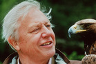 Sir David Attenborough says seeing monkeys ripped apart by chimps was the most distressing sight of his career.