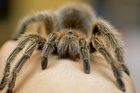 A fear of spiders is one of the most common phobias. Photo / Thinkstock