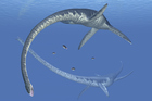 Elasmosaurus roamed the oceans over 70 million years ago. Photo / Getty Images
