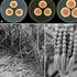 Pencicillium: Distinguished by the bright orange color it displays when produced in colonies. Photo / Cobus M. Visagie