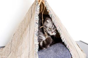 Home-maade tepee. Photo / Babiche Martens.
