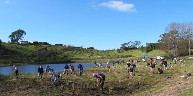 Planting day at the Athenree Wetlands was a great success thanks to the many people who planted the native flaxes and plants around the developing wetland.