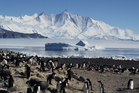 Adelie Penguins on Antarctica's Cape Hallett. Photo / Phil Lyver