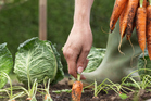 Spend your spare time in the vege garden.