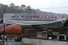 This sign at a strawberry farm was spotted during a recent trip to Cameron Highlands Resort in Malaysia.
